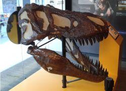 Institut Català de Paleontologia Miquel Crusafont