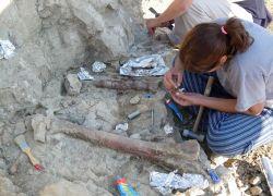 Els principals jaciments paleontològics dels Països Catalans